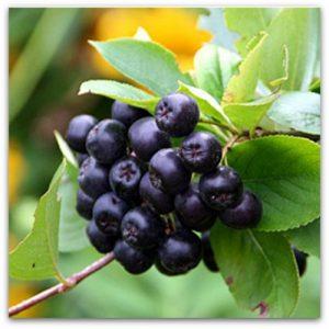 - Jagodičasto voće